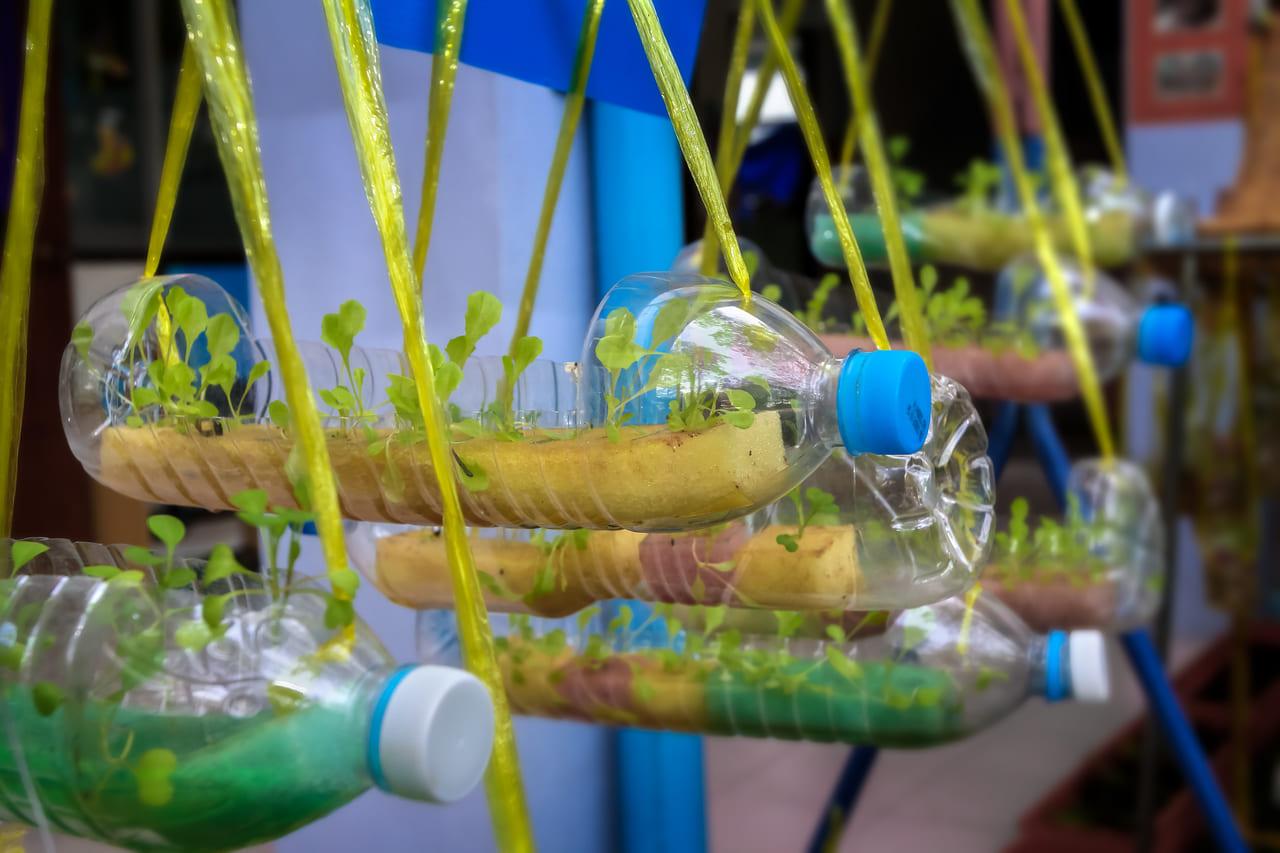 家庭菜園 キッチン ペットボトル菜園