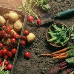 家庭菜園 野菜