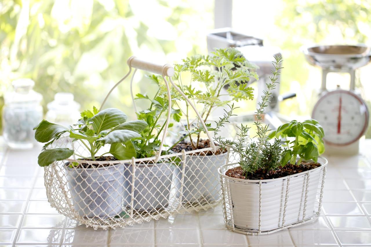 キッチン 家庭菜園
