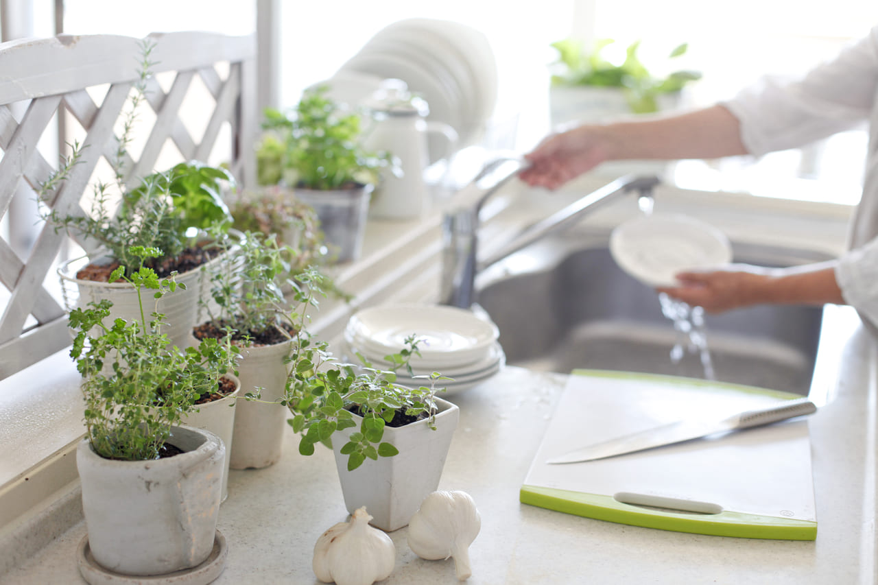 家庭菜園 初心者 キッチン