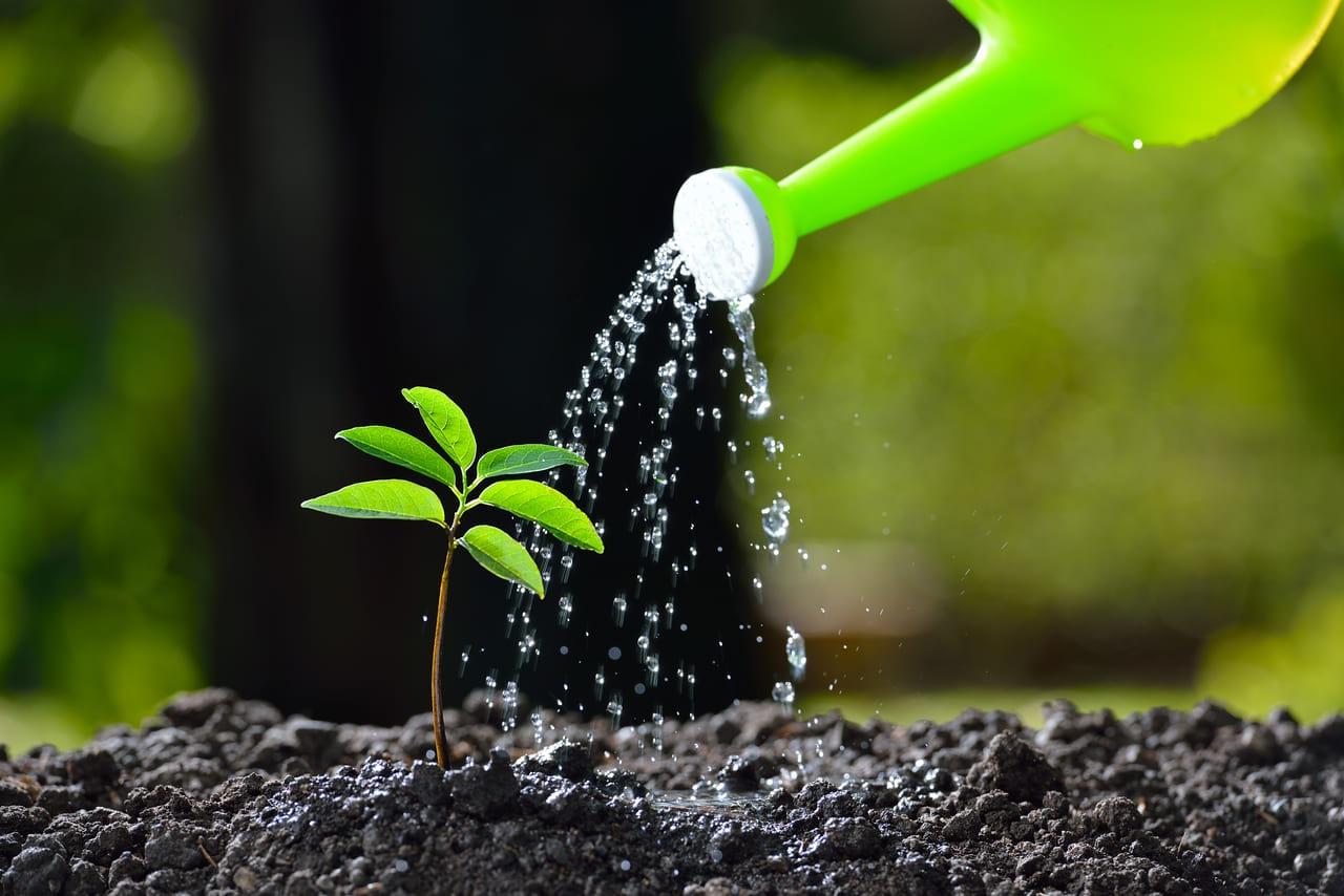 家庭菜園 発芽