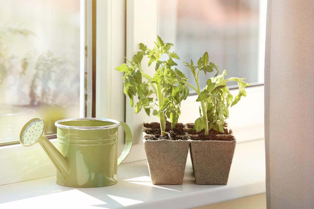 家庭菜園 場所を確保する