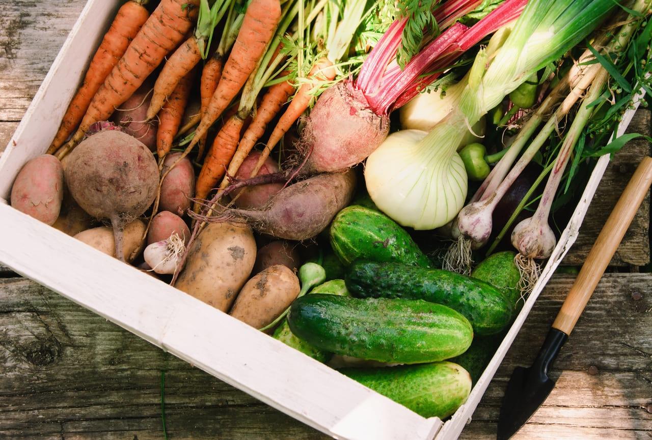 家庭菜園 野菜作り